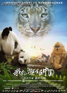 《我们诞生在中国》海报