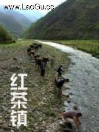 《红茶镇》海报
